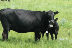 Organic Beef Products