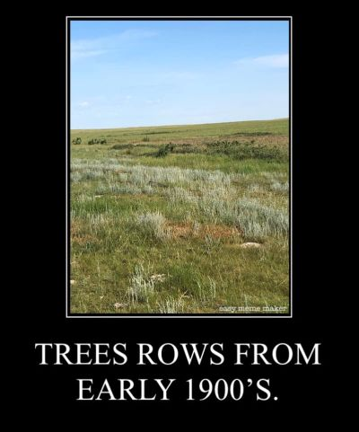 Trees planted on the prairie in the early 1900s